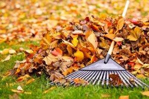 bayou cane leaf cleanup